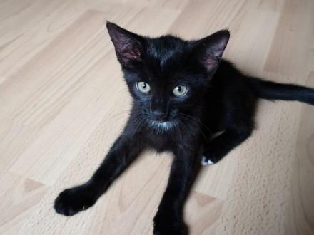 LUSIA ;#8211; śliczna 2 miesięczna kotka poleca się do adopcji!    wielkopolskie Poznań