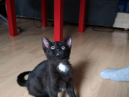 LUSIA – śliczna 2 miesięczna kotka poleca się do adopcji! ,  wielkopolskie Poznań