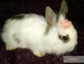 króliki króliczki miniaturki