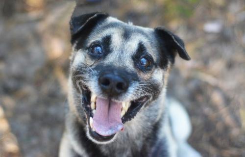 Budrys - radosny  niekonfliktowy psiak szuka domu!