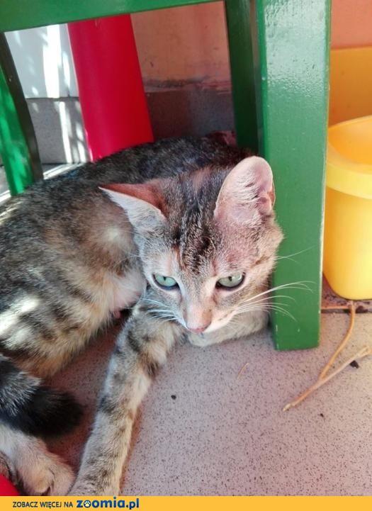 Delikatna Freya, cudowna, młodziutka koteczka do pokochania!
