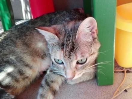 Delikatna Freya  cudowna  młodziutka koteczka do pokochania!
