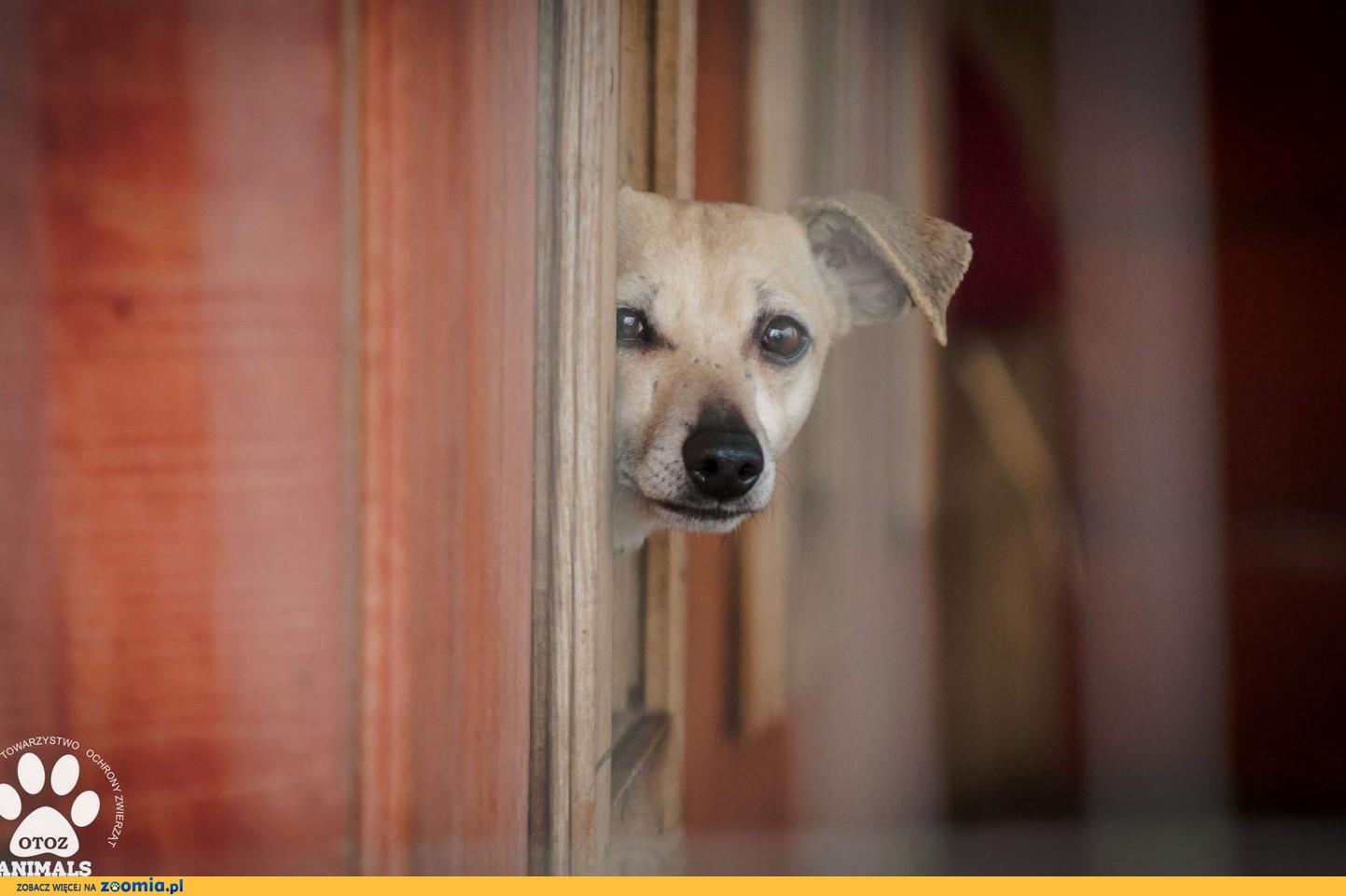 OTOZ Animals - Hela - przerażona jamnikowata suczka z wielkim strachem