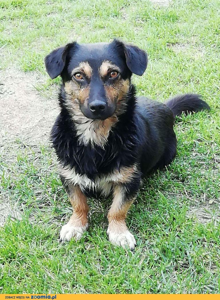 Gucio – mały psiak szuka bezpiecznego domku