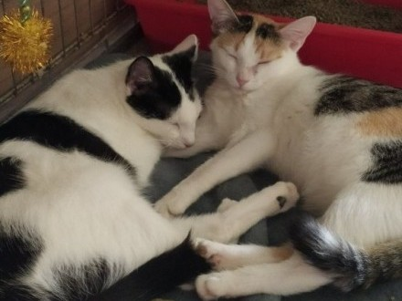 Lulu i Morka