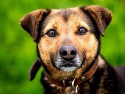 Do serca przytul psa co na imie Walik ma :)   lubelskie Lublin