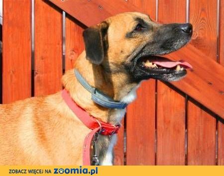 ROKI - super psiak już tak długo czeka na dom...FILM,  mazowieckie Warszawa