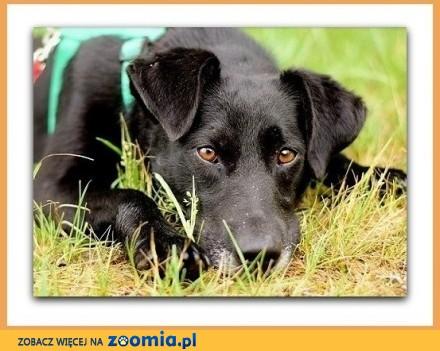 Średni czarny łagodny radosny towarzyski psiak WĘGIELEK_Adopcja_