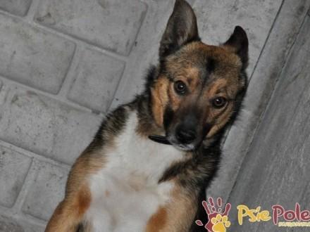 SERWESEK-Spokojny  nieśmiały mały psiak-szukamy troskliwego opiekuna  adopcja
