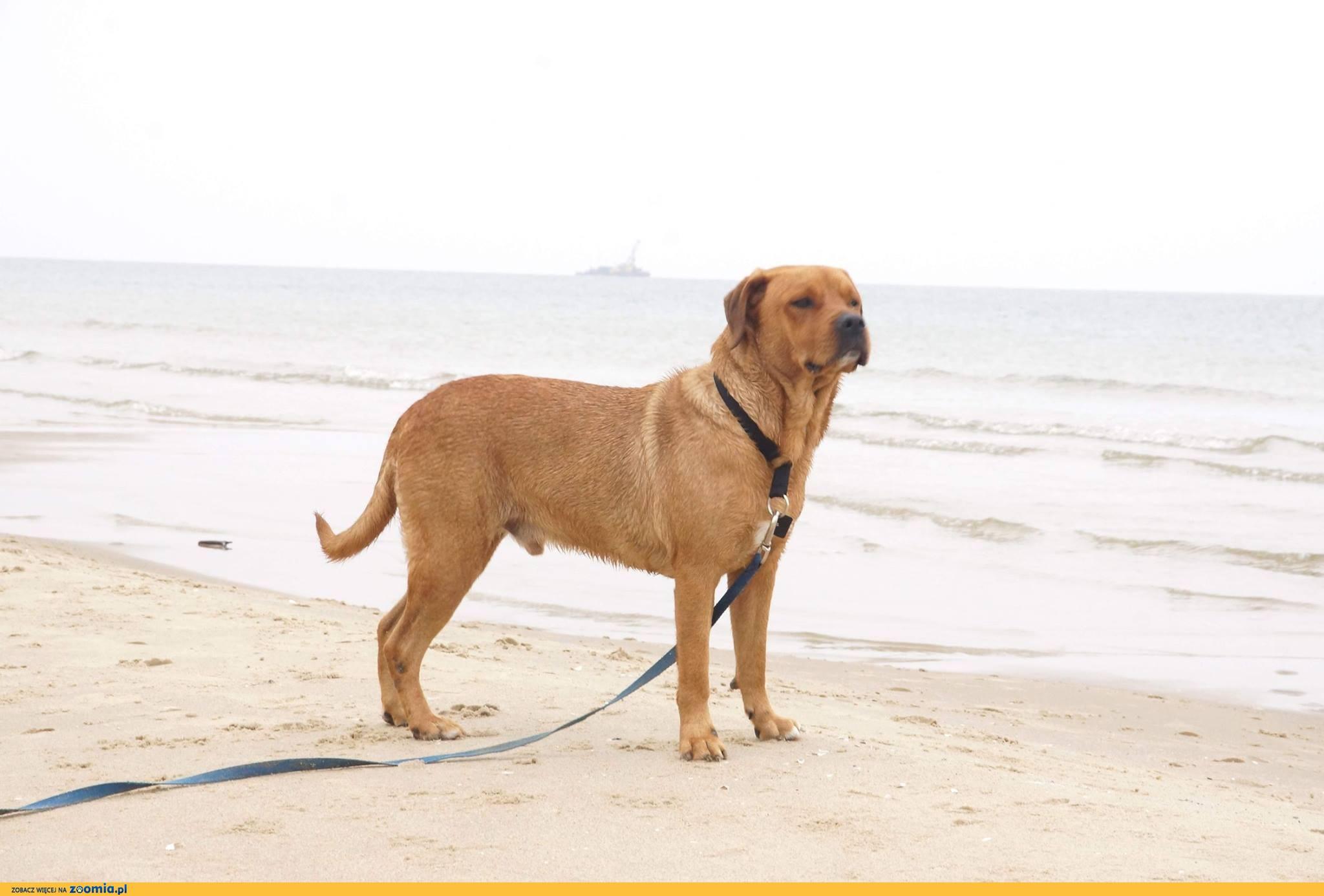 Chucky, cudowny pies, młody wychowany, pozytywny!