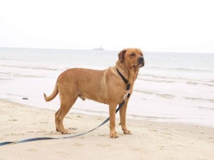 Chucky  cudowny pies  młody wychowany  pozytywny!