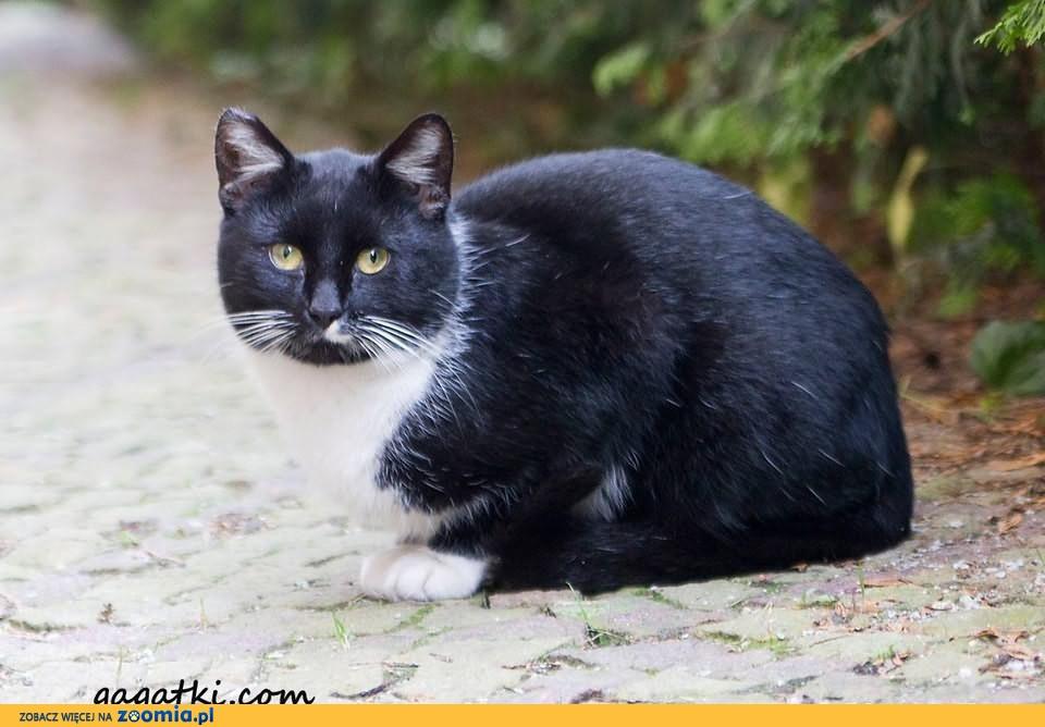 Luboń - przybłąkał się domowy kot!