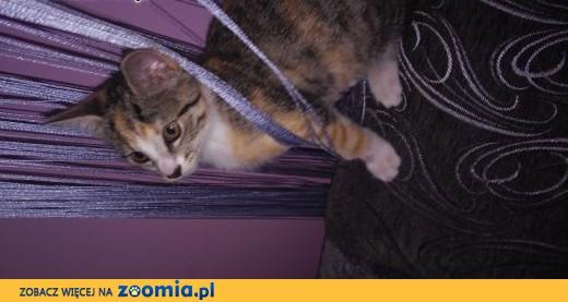 Ogromny Ogłoszenia: oddam kota, oddam kocięta – Koty i kociaki szukają FM27