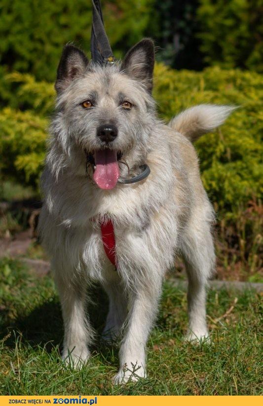 Przepiękny Iwan, zjawiskowy, przytulaśny psiak do adopcji!