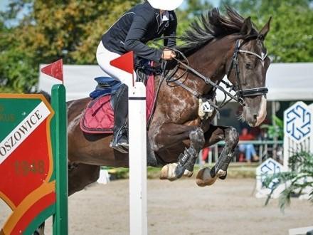 Wydzierżawię konia