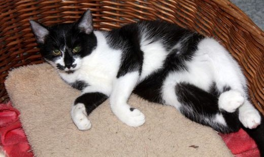 Młoda koteczka Rusia szuka domu   dolnośląskie Wrocław