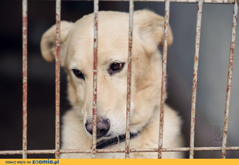 Adaś, wesoły, towarzyski psiak szuka domu!