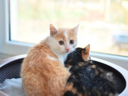 Niesamowici Sansa i Brandon z Fundacji Miasto Kotów szukają domu