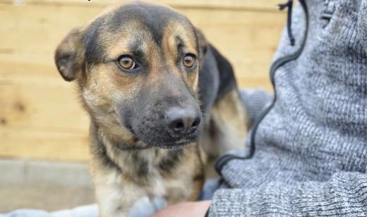 King- wspaniały  młody psiak czeka na nowy dom    pomorskie Wejherowo