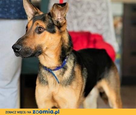 IMBIR - młody, energiczny, świetny psiak szuka domu,  mazowieckie Warszawa