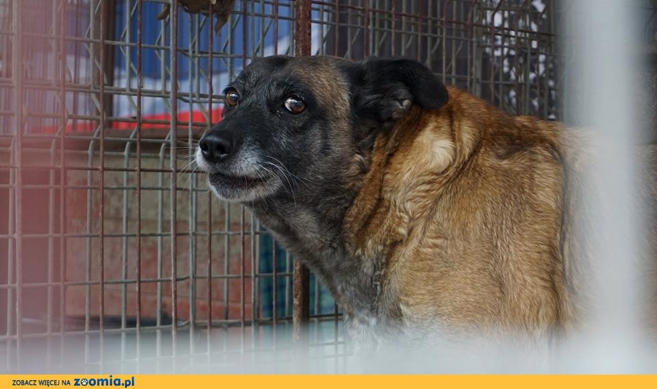 Tajga - w schronisku od szczeniaka - adopcja