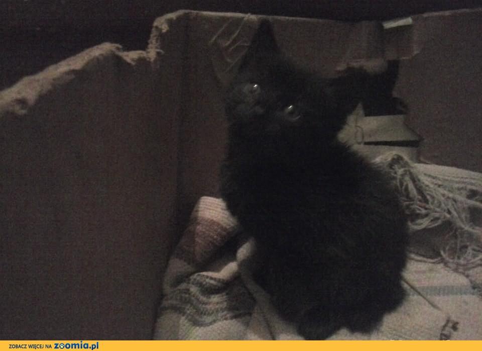 Oddam kociaki w dobre ręce :-)