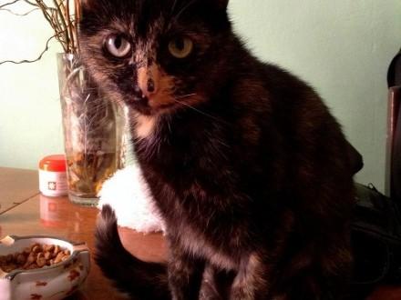 Koteczka Macia szuka domu