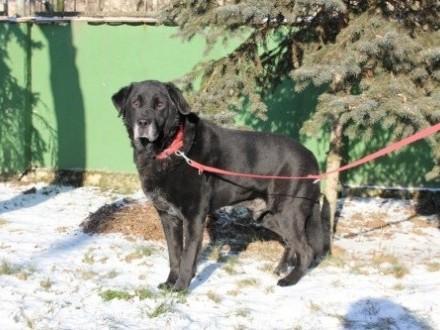 Stanisław - spokojny psi senior potrzebuje domu