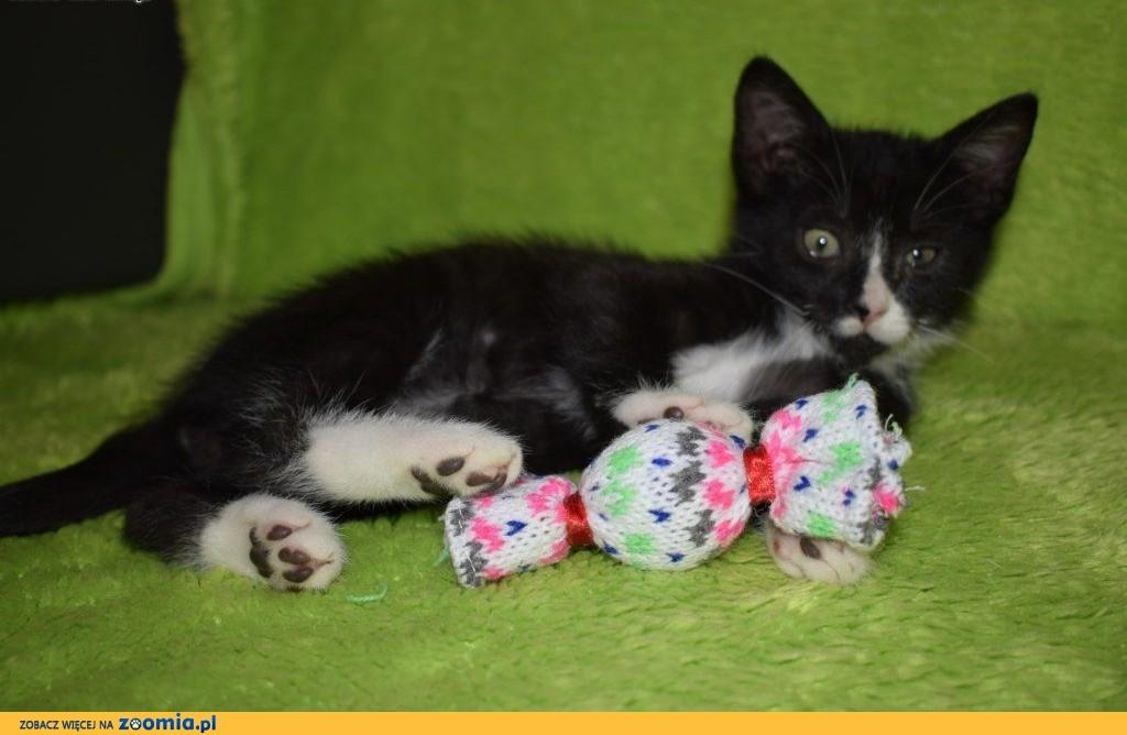 3 miesięczne KOCIĘTA szukają odpowiedzialnych domów!,  Koty pospolite cała Polska