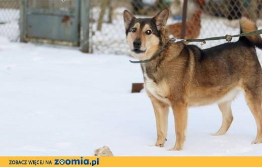Zorro – 6 letni chłopak szuka swojego miejsca!,  mazowieckie Warszawa