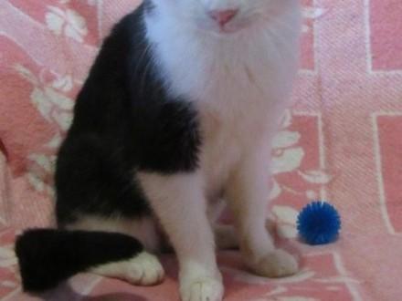 Pola  młoda koteczka do adopcji!