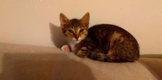 Mała kotka Mona szuka domu   łódzkie Łódź