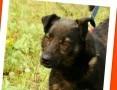 10 kg,sympatyczny,towarzyski czarny kundelek BILBO_Adopcja