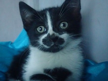 Kuna szuka domu 2msc kotka,  mazowieckie Warszawa