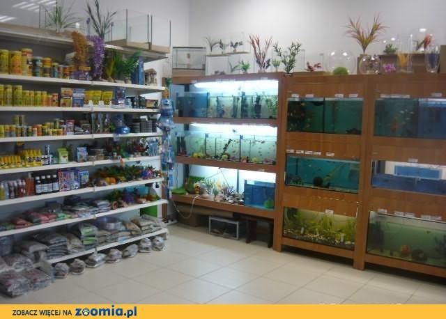 Ryby Akwariowe Duży wybór Gremi Białystok