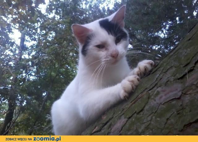 Przygarniesz Kropka? Cudownego, 5mies. przytulastego kotka?