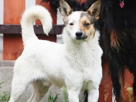 Wesoły cudny psiak szuka domu