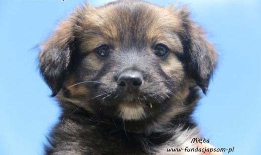 Mięta - szczeniak szuka domu   mazowieckie Nowy Dwór Mazowiecki