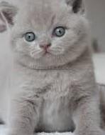 polkowice koty