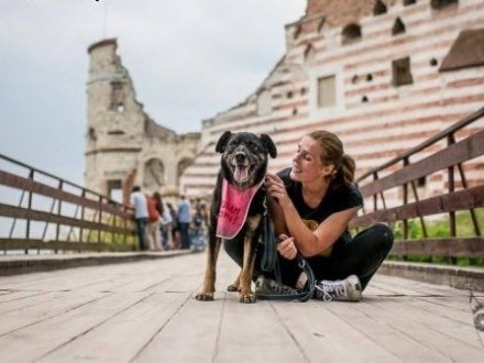 WŁODEK - mądry i wspaniały  kompan doskonały!   mazowieckie Warszawa
