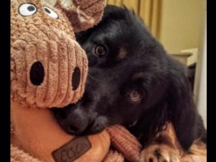 Oddam psa - Kacper szuka nowego domu