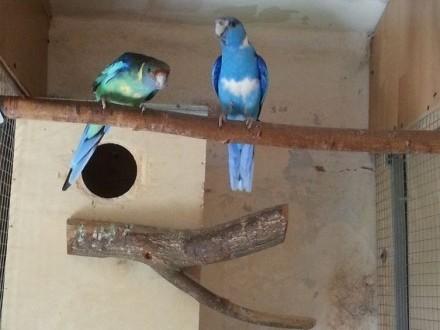 Likwidacja hodowli papug