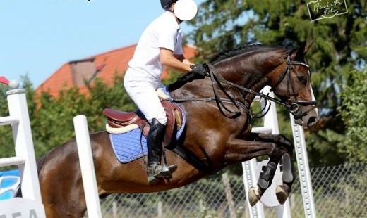 Sisco du Mesnil- selle francais- skoki!   warmińsko-mazurskie Olsztyn