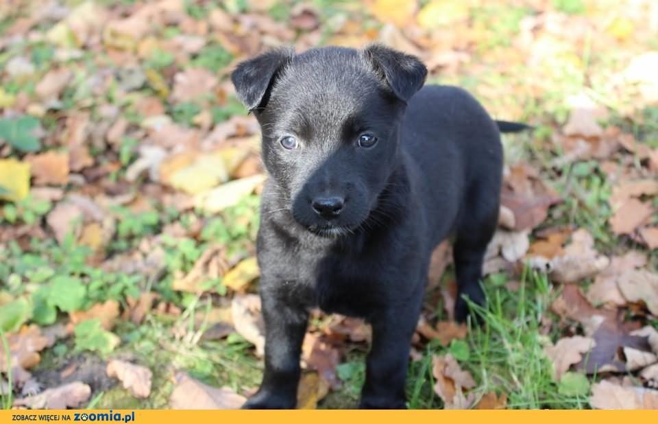 Holly - szczeniaczek do adopcji! :)
