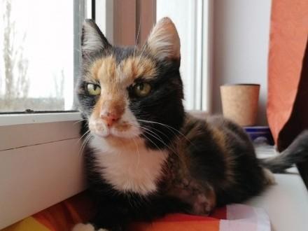 Helga – kocia trójłapka szuka domu