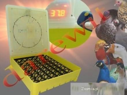 INKUBATOR WYLĘGARKA PTAKÓW półautomat sterowanie elektron