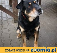 Straznik Bono,  mazowieckie Warszawa