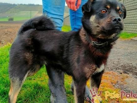 FUGGI - energiczny  wesoły  kochany młodziutki psiak szuka domu