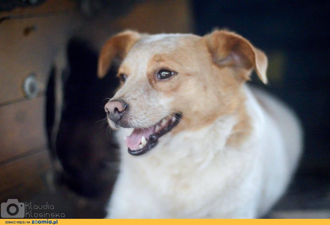 Niewielki przytulasek Czapi, grzeczny psiaczek szuka dobrego domu!