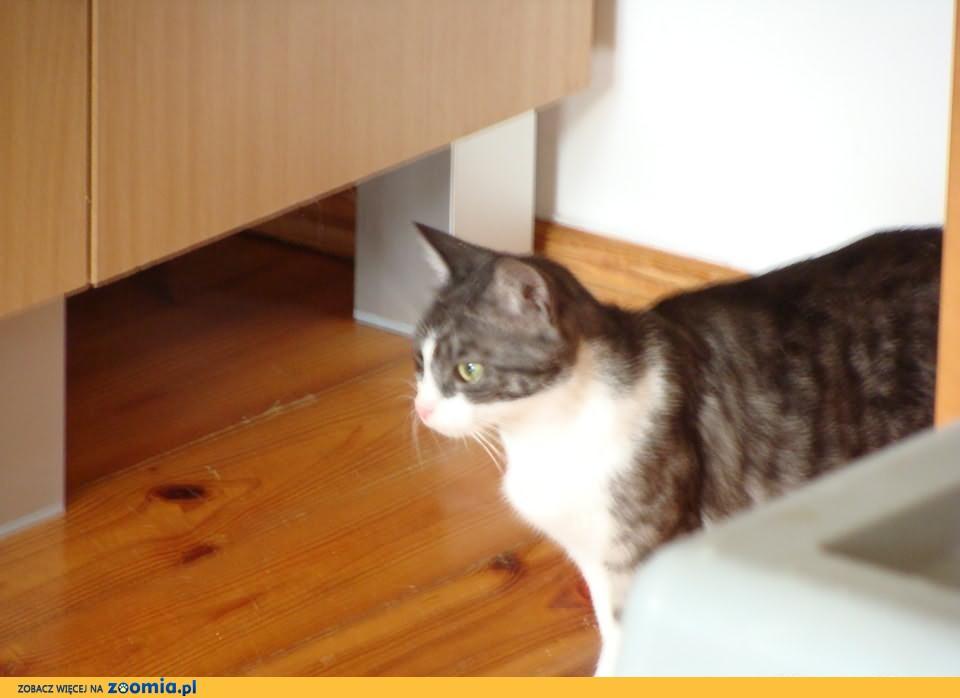 zielonooka pełna gracji młodziutka kotka szuka domku